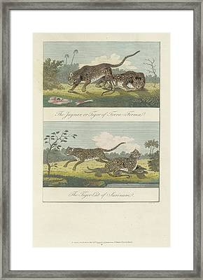 Jaguar And Tiger Cat Framed Print by British Library