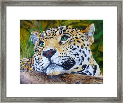 Jaguar Big Cat Original Oil Painting Hand Painted 8 X 10 By Pigatopia Framed Print by Shannon Ivins
