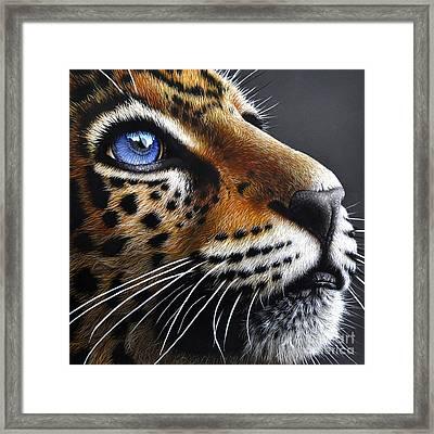 Jaguar Cub Framed Print