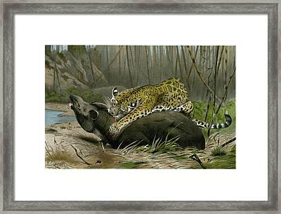 Jaguar Killing Tapir Framed Print