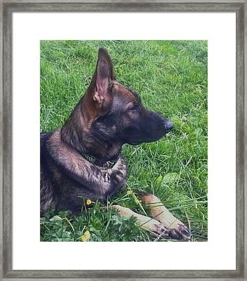 Jake On Guard Framed Print