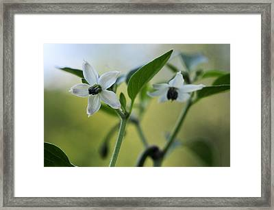 Jalapeno Flowers Framed Print by Kathryn Whitaker