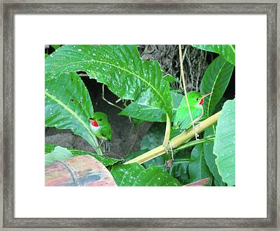 Jamaican Toadies Framed Print by Carey Chen