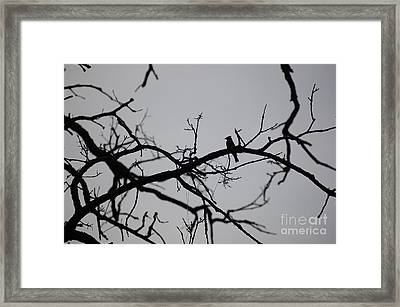 Jammer Bird And Tree Silhouette Framed Print by First Star Art