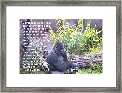 Jane Goodall Gorilla Framed Print by Barbara Snyder