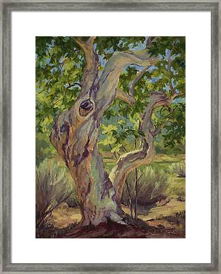 Spring Sycamore Framed Print by Jane Thorpe