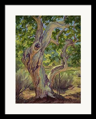 Tree. Sycamore Framed Prints