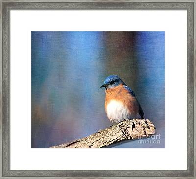 January Bluebird Framed Print
