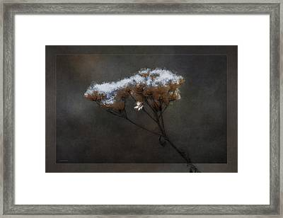 January Bouquet Framed Print by Ron Jones