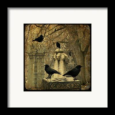 Crows Mingling Framed Prints