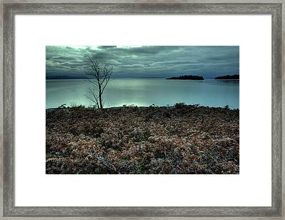January Juniper Bush Framed Print by Jakub Sisak