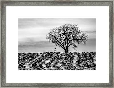 January Framed Print by Penny Meyers