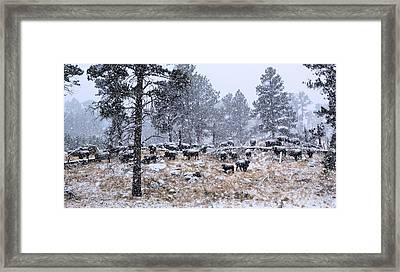 January Snow Framed Print