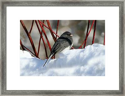 January Snow In New England Framed Print