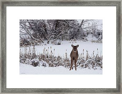 January Visitors Framed Print by Ron Jones