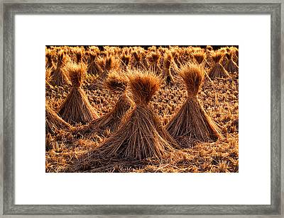 Japan Hay Bundles Framed Print by Daniel Hagerman