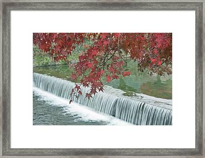 Japan, Kyoto, Arashiyama, Maple Leaves Framed Print by Rob Tilley