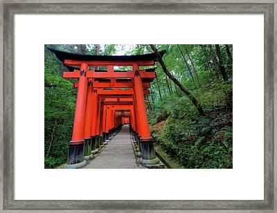Japan, Kyoto Torii Gates Framed Print
