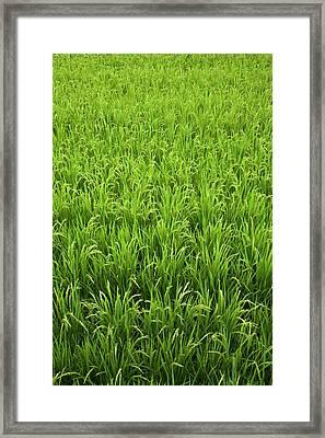 Japan, Nara, Heguri-cho Framed Print
