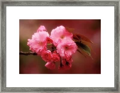 Japan, Osaka Close-up Of Cherry Framed Print