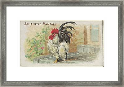 Japanese Bantam, From The Prize Framed Print