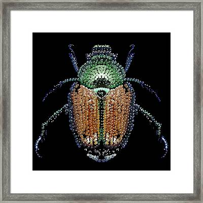 Japanese Beetle Bedazzled Framed Print by R  Allen Swezey