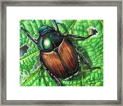 Japanese Beetle Framed Print by Shana Rowe Jackson
