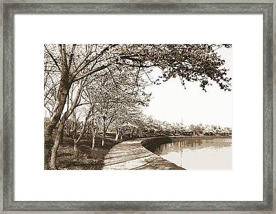 Japanese Cherry Blossoms, Cherry Trees, Waterfronts Framed Print by Litz Collection