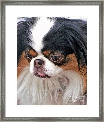 Framed Print featuring the photograph Japanese Chin Dog Portrait by Jim Fitzpatrick
