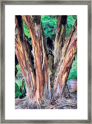Japanese Crape Myrtle Tree Framed Print