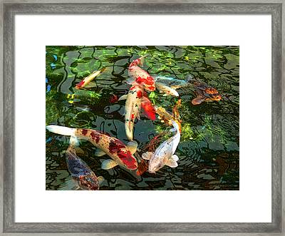 Japanese Koi Fish Pond Framed Print by Jennie Marie Schell
