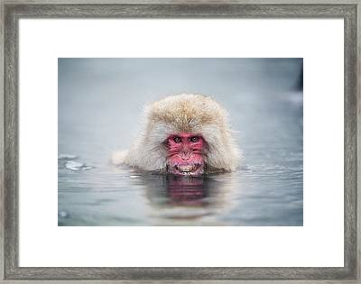 Japanese Macaque In A Hot Spring Framed Print by Dr P. Marazzi