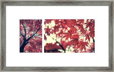 Japanese Maple Collage Framed Print by Hannes Cmarits