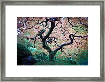 Japanese Maple In Autumn Framed Print