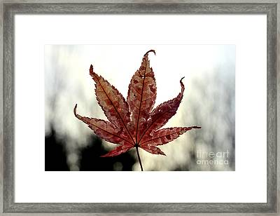 Framed Print featuring the photograph Japanese Maple Leaf - 3 by Kenny Glotfelty