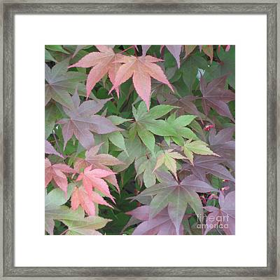 Framed Print featuring the photograph Japanese Maple Leaves by Christina Verdgeline