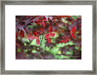 Framed Print featuring the photograph Japanese Maple Tree by Eva Kaufman