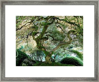 Japanese Maple Tree II Framed Print by Athena Mckinzie