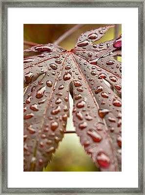 Framed Print featuring the photograph Japanese Maple Tree Leaf Waterdrops by Bob Noble Photography