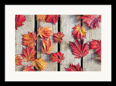 Fallen Leaf Framed Prints