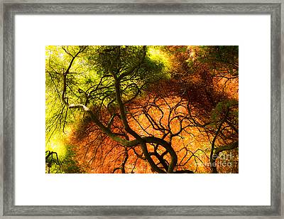 Framed Print featuring the photograph Japanese Maples by Angela DeFrias
