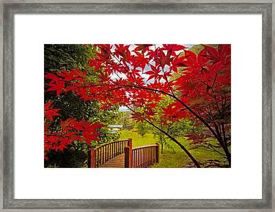 Japanese Maples Framed Print by Debra and Dave Vanderlaan