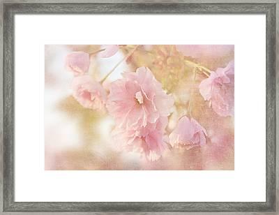 Japanese Ornamental Cherry Framed Print