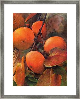 Japanese Persimmon Framed Print