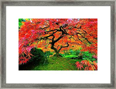 Japanese Red Maple Framed Print by Monique Wegmueller