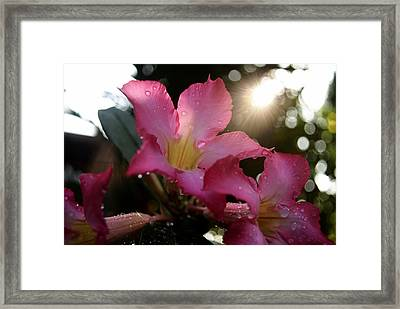 Framed Print featuring the photograph Jardin Du Matin by Miguel Winterpacht