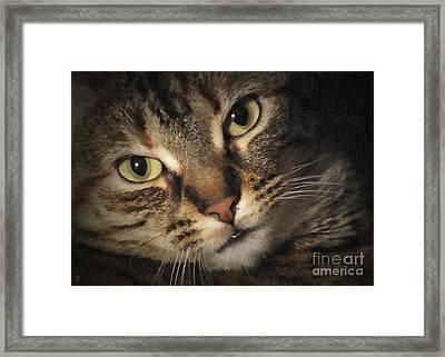 Jasmine Framed Print by Debi Dmytryshyn