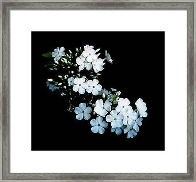 'jasmine Detail' Framed Print