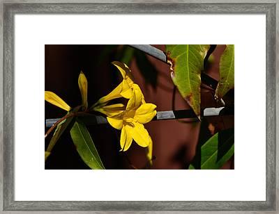 Jasmine Framed Print by Larry Bishop