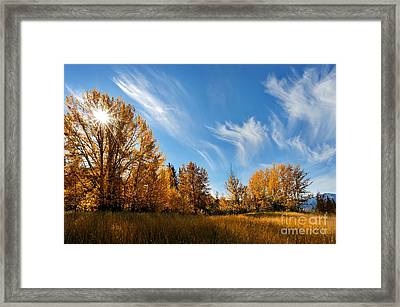 Jasper - Autumn Sky Chief Framed Print